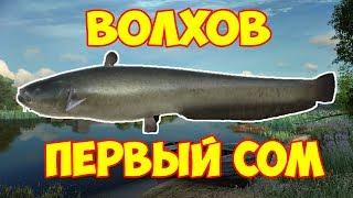 русская рыбалка 4 . ПЕРВЫЙ СОМ . река Волхов
