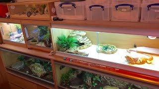 REPTILE ROOM & FEEDING (SEPTEMBER 2016)