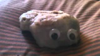 Taking care of your pet rock