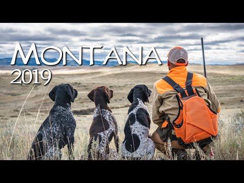 Montana Sharptail Hunt 2019