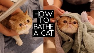 HOW TO BATHE A CAT | SVEN AND ROBBIE