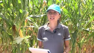Успешно земеделие - броят от 19. 08. 2021