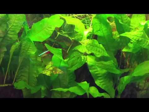 Aquarium Water Circulation & Flow