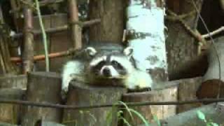 Животные Киевского зоопарка