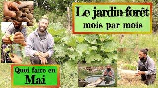 Jardin_foret_en_Permaculture._Que_faire_en_Mai_
