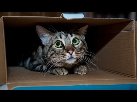 Try not to laugh or smile - Funny cat, animal video Compilation 2017