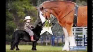 cei mai frumosi caii