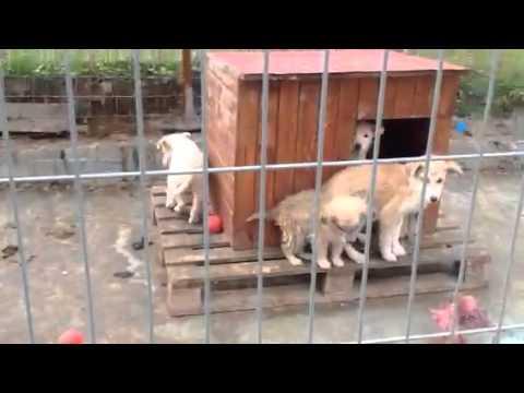 Animal Friends Foundation - Burgas, Bulgaria