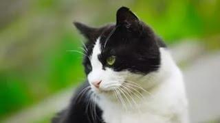 Смешной  рассказ про кошек.Забавные истории про кошек.
