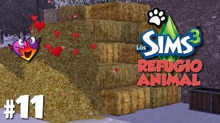 Video Los Sims 3 | Refugio animal | Vamos a por un bebe!! | Ep.11 download MP3, 3GP, MP4, WEBM, AVI, FLV September 2018