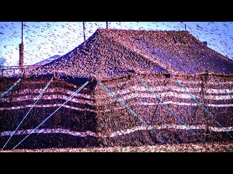 Karma hits Saudi Arabia, Billions of locust plague 2021