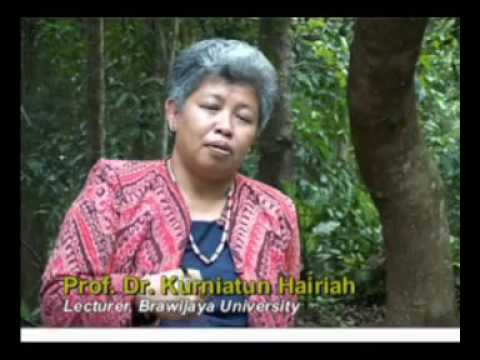 Ten years of agroforestry research in Indonesia