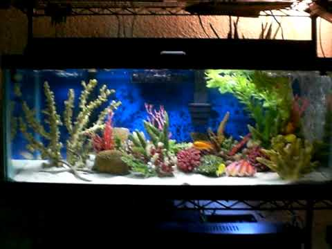 Freshwater aquarium fish tank marine saltwater theme for How to make saltwater for fish