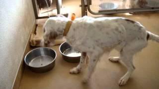 2009年1月千葉県動物愛護センターにて 収容されていたときのモカちゃん...
