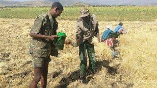 Ethiopian Farmers - Amharic Poem - አማረኛ ግጥም