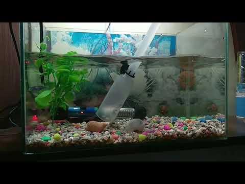 Как правильно поменять воду в аквариуме полностью