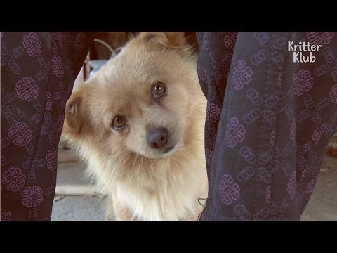 A Dog Waiting For Her Owner All Day At The Bus Stop | Kritter Klub