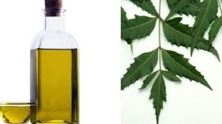 How To Make Neem Oil at Home and Benefits