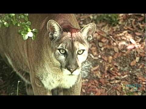 Florida's Endangered Species