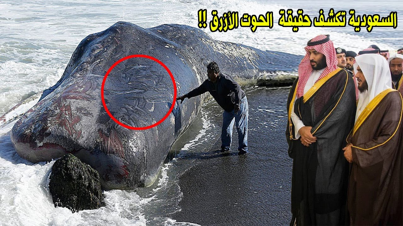 لن تصدق السعودية تكشف حقيقة صوت الحوت الأزرق الذي أفـ ـزع الناس وهل هو من علامات الساعة Youtube