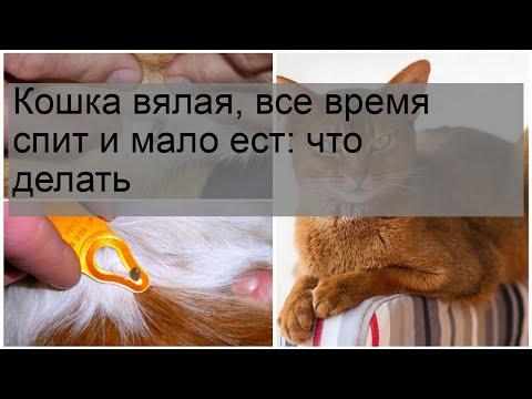 Вопрос: Почему котенок вялый и спит вторые сутки?