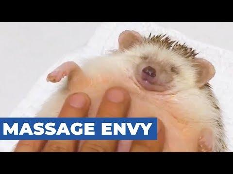 Hedgehog Gets A Massage