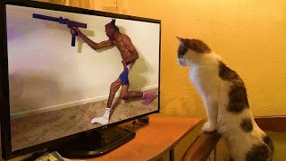 Here Are Some Hilarious Pets, Just To Make Your Day Better 🥰