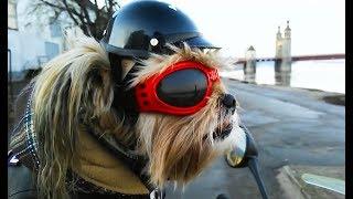 Coole Videos #375: Hund auf Motorrad / Biker Dog || ✪ Stern DuTube