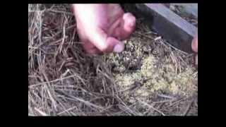 видео 6 способов как вывести красных муравьев из дома, квартиры