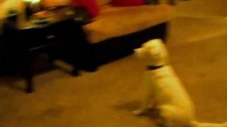 Elu The Deaf Dog