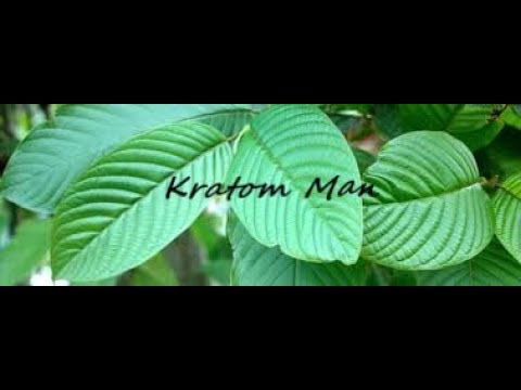 How And Why To Prune Kratom Plants