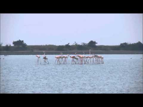 Kodikkarai / Point Calimere Wildlife and Bird Sanctuary