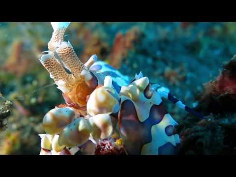 Canon PowerShot G16 underwater