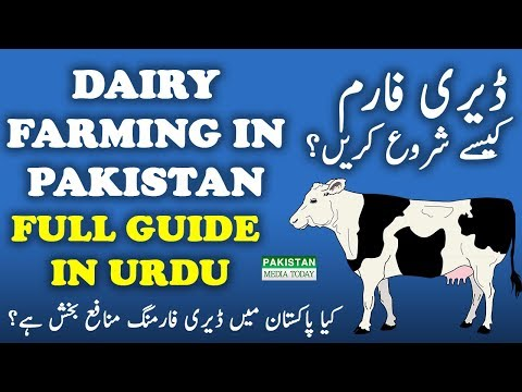 How to Start Dairy, Cattle Farming Business Full Guide Tips