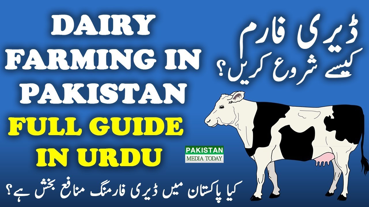 Pak dairy info urdu selection of dairy animals.