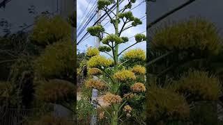 Giống Hoa lạ- hoa sức sống vươn cao