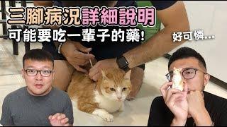 【三腳病況詳細說明,可能要吃一輩子的藥!】志銘與狸貓 thumbnail