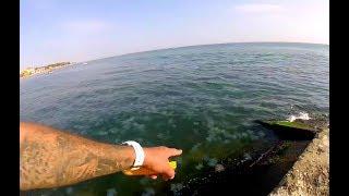 Аномальное количество медуз в Железном Порту