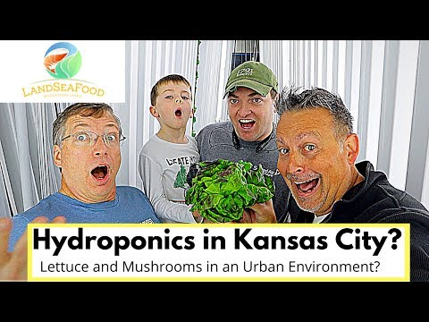 Hydroponics A SECRET TIP! (Mushrooms & Lettuce)