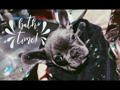 Puppy's First Bath!