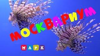Москвариум самый большой океанариум в Европе