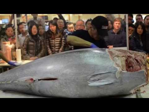 $10,000 Knife Cuts Bluefin Tuna Like Butter Part 2