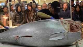 $10,000 Knife Cuts Bluefin Tuna like Butter Part 2