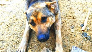 Девушка ПОДКАРМЛИВАЛА собаку на дачах, но ОДНАЖДЫ нашла её в плачевном состоянии