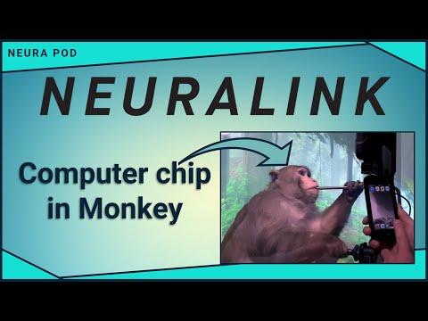 Neuralink Monkey Plays Mind Pong