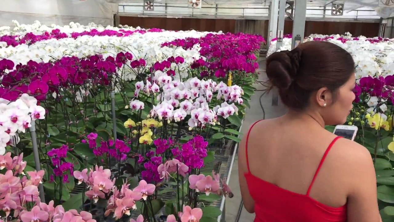 Formosa Orchid Nursery