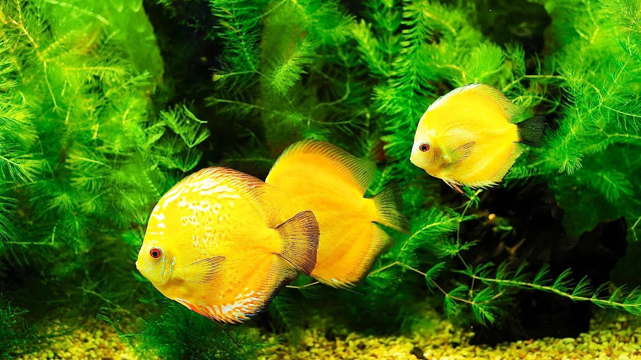 Why Does Your Fish Tank Smell Bad