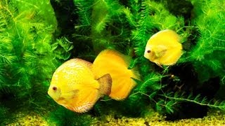 Why Does Your Fish Tank Smell Bad?   Aquarium Care