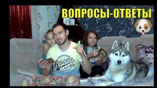 Хаски онлайн | Прямой эфир | Собака и ребёнок | Вопросы-Ответы #2