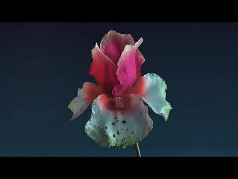 Flume - Numb & Getting Colder feat. Kučka - Baauer Remix